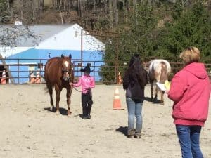 horse-trail-riding-lessons, Paulinskill Valley Trail, Newton, NJ