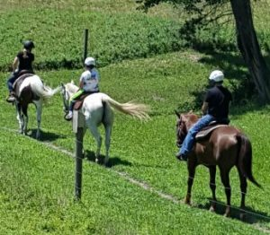 horse trail riding lessons, sussex county, NJ