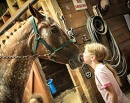 Horse riding lessons, summer horse camps