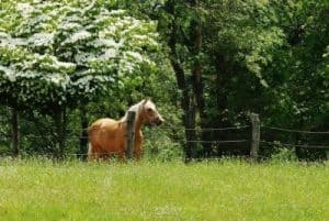 horse riding lessons, horse trails, boarding, Sussex County