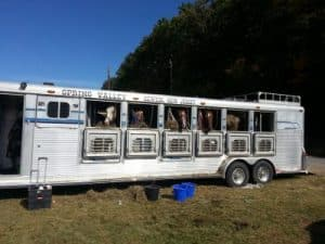 horse camps for kids, horse trail lessons, riding lessons